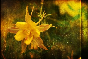 my-golden-grunge-flower