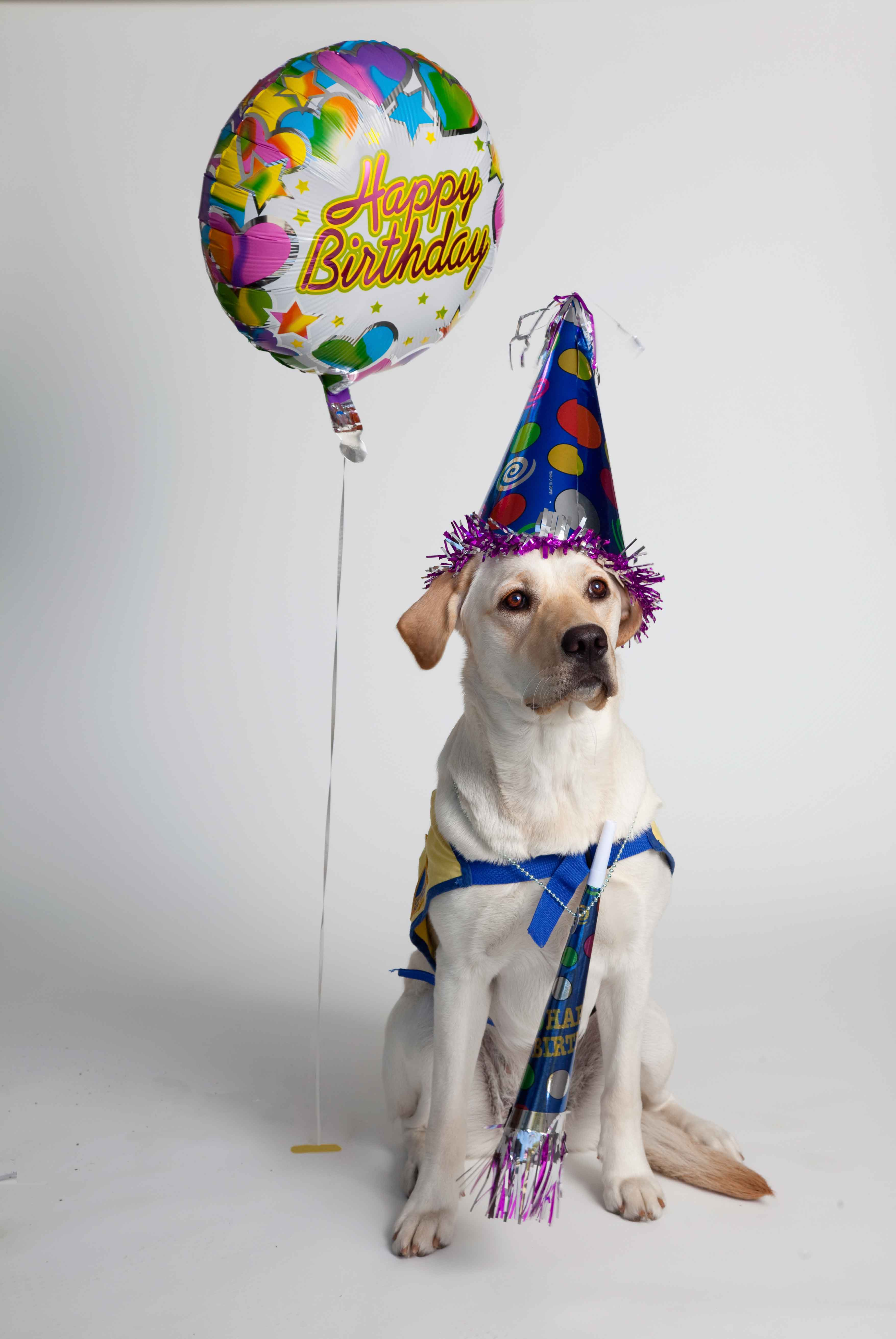 The Scented Hound Turns 1 Year Old With A Birthday Draw