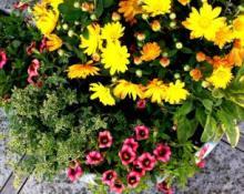 herbsandflowers
