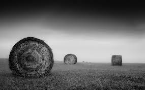 smoky hay