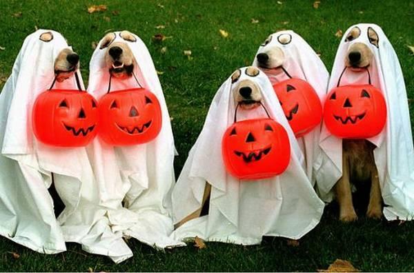 halloween-dogs