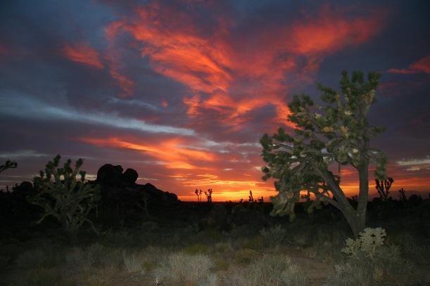 Mojave Desert Morning