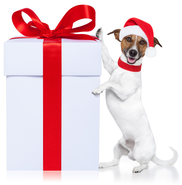 dog-with-christmas-gift-2015