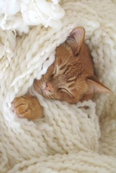 Cozy Kitty