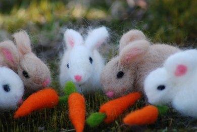 Rabbits&Carrots