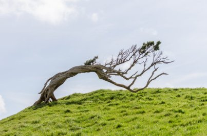 windswept grassy hill